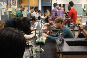 The class is working hard to see the reaction and get a full understanding of the lab.