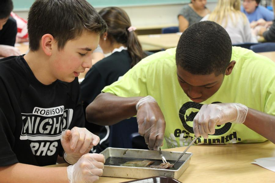 Biology+Students+Experience+Dissection+Hands-On