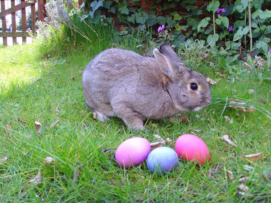 With+Easter+right+around+the+corner%2C+rabbits+and+eggs+can+be+seen+all+over.