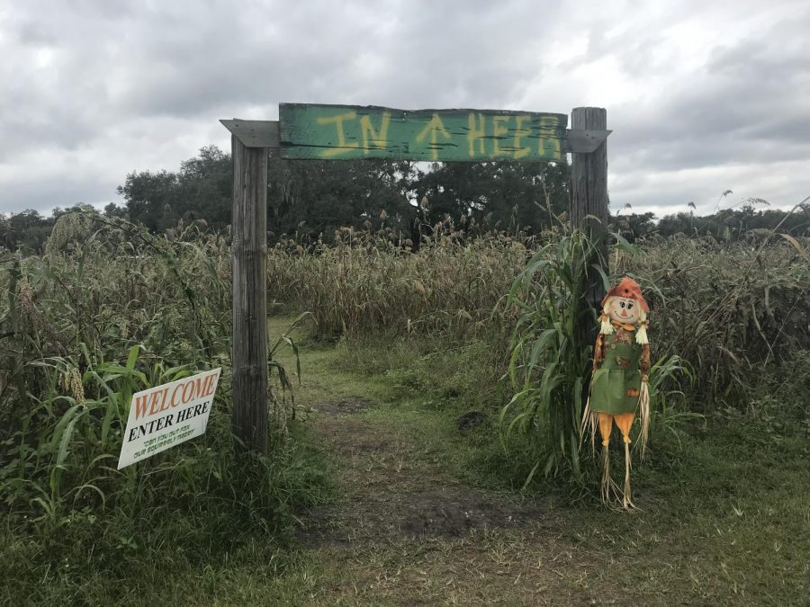 Entrance to the corn maze welcomes you with a scare crow
