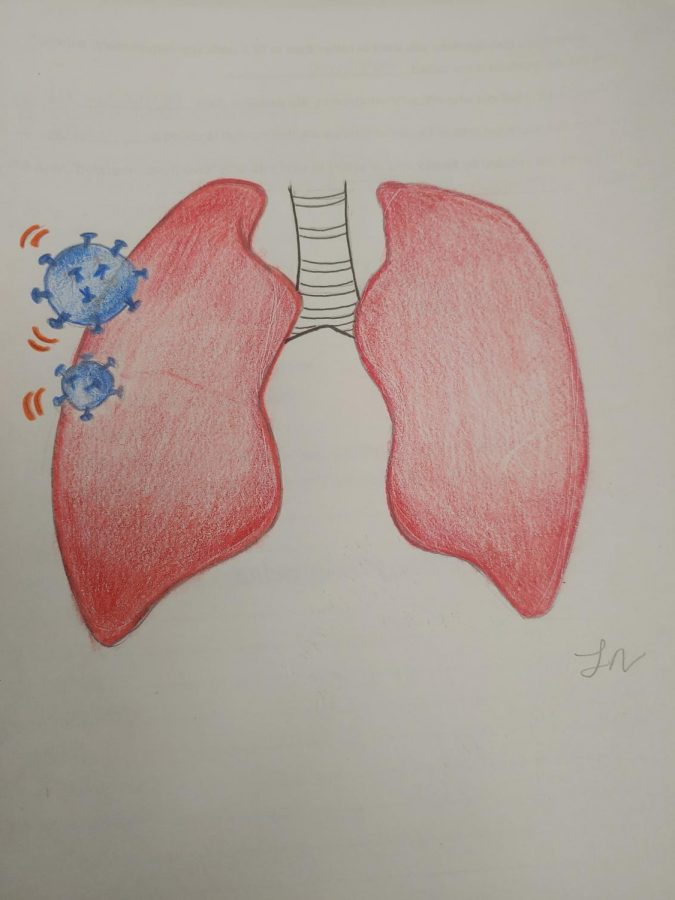 An+illustration+by+Laura+Nava+%28%2720%29+depicts+the+way+in+which+the+coronavirus+attacks+the+respiratory+system.