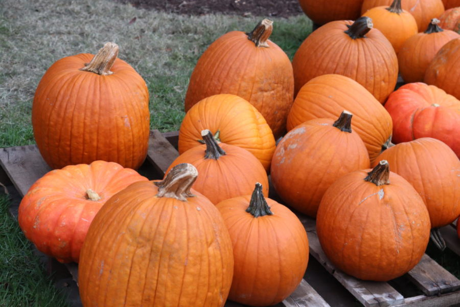 ISSUE 1: Local Halloween Events in Tampa